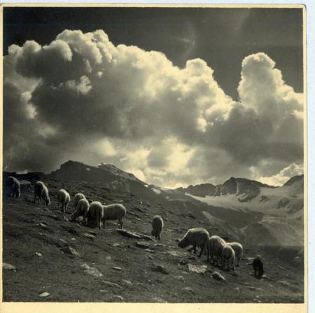 Ultimi pascoli in Val di Solda (Gruppo dell'Ortler)