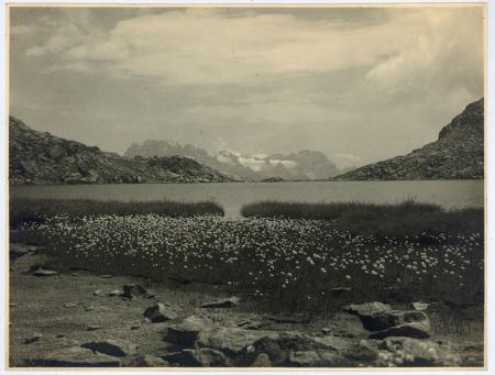 Flora alpina al Lago Serodoli