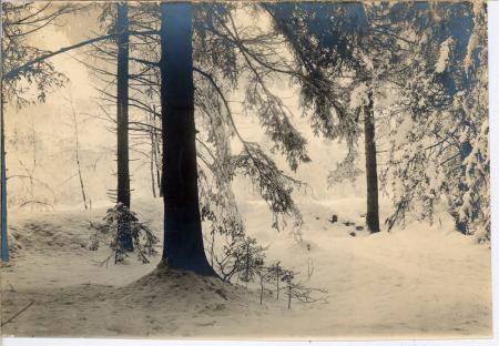 L'hiver a Chamonix - Bois de Pélerins