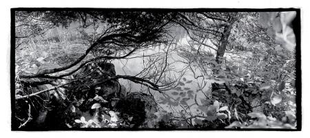 Marion Lake II, 2000