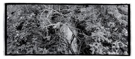 Warden's Lake Trail, 1994/ Ernie Kroeger