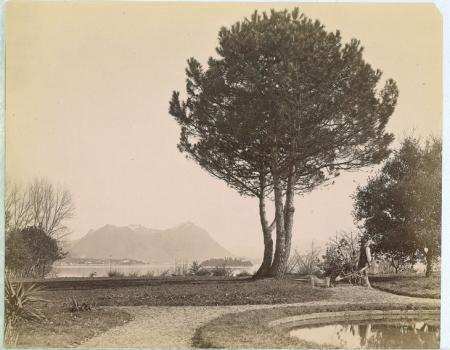 [Giardino in zona lacustre: Lago Maggiore? Isola Madre?]
