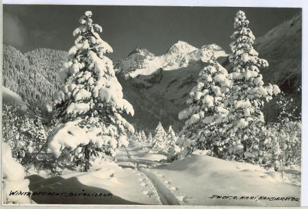 Winterpracht Blümlisalp