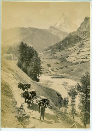 [Trasporto con i muli nella valle di Zermatt]