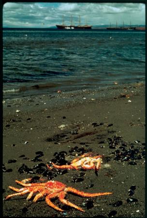 [Punta Arenas: spiagge dello Stretto di Magellano]