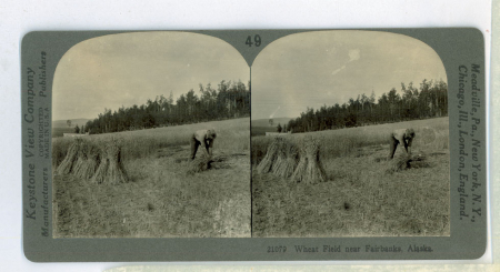 AL49 (21079) - Wheat Field near Fairbanks, Alaska
