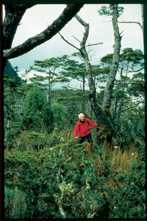[Nella foresta di Bahía Escandallo, ai piedi del Cerro Sarmiento]