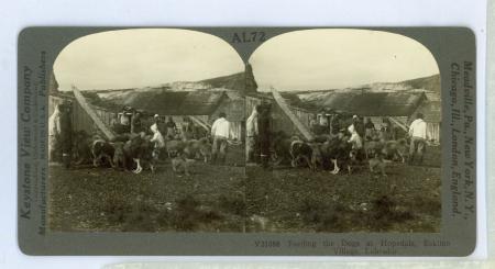 AL72 (V21088) - Feeding the Dogs at Hopedale, Eskimo Village, Labrador