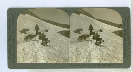 AL73 (16318) - Eskimo Dog on Trail, Hopedale, Labrador