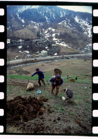 [Riprese varie di agricoltura in montagna e vedute di Colle di Santa Lucia, Larzonei, Pralongià, Val Varaita]