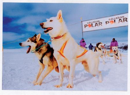 Fjällräven Polar Race