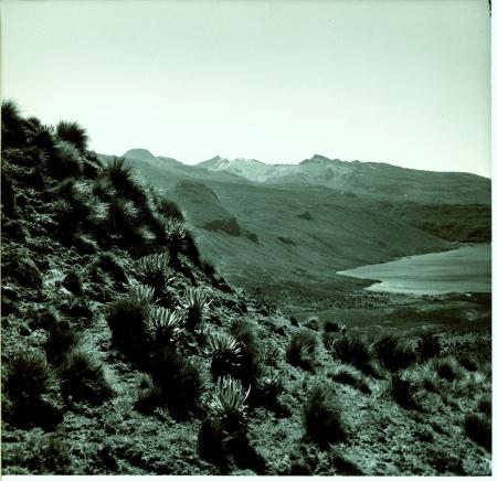 Vegetazione andina tropicale, sullo sfondo veduta della cordigliera del Quindio