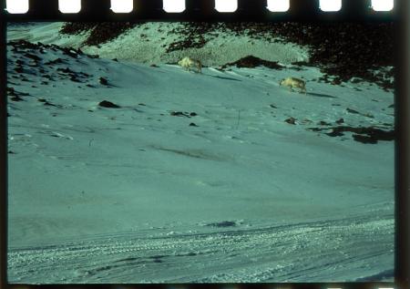 [Riprese varie della spedizione alle Isole Svalbard]