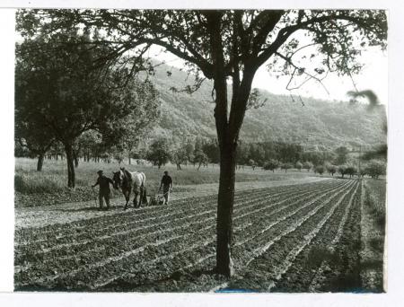 Agricoltura [scena di aratura]