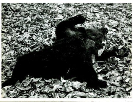 [Riprese varie della manifestazione contro l'abbattimento degli orsi, degli animali del parco e la speculazione edilizia nelle zone parco, Penne (Abruzzo)]
