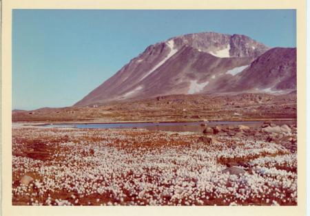 Fiori dell'estate artica, Angmagssalik
