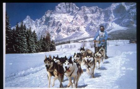 Sled dog. S. Vito di Cadore (BL) gara internazionale