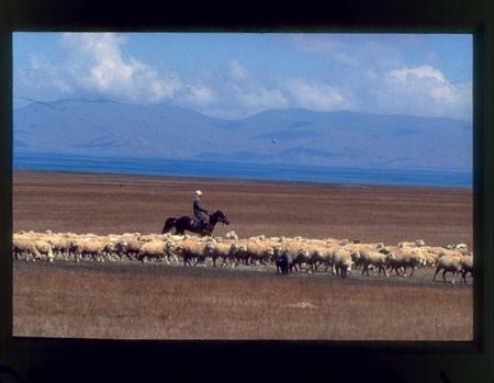 [Riprese varie di paesaggi, architetture, popolazioni locali in Kazakistan, Kirghizistan, Tagikistan, Uzbekistan. Rilievi montuosi e fauna delle Alpi]