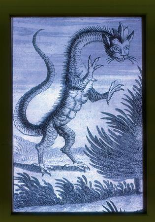 [Autore non identificato, iconografia medievale: incisioni con serpi e draghi]