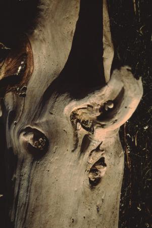 [Alberi: dettagli del legno dei tronchi]