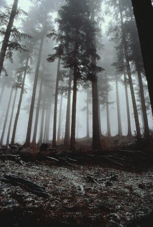 [Natura: bosco e uccello]