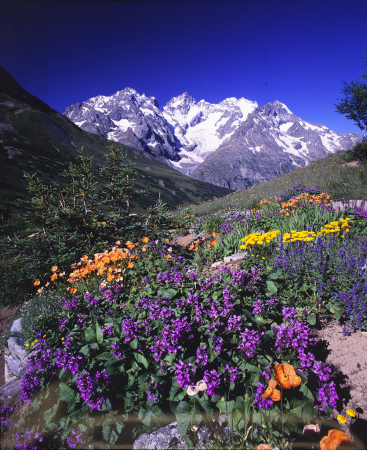 [Jardin Alpin du Lautaret]