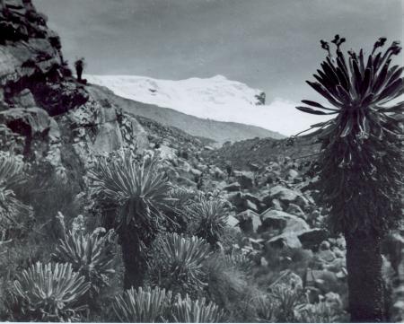 Sierra Nevada de Cocuy o Chita. Alto Ritacuva in primo piano il Frailejones