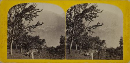 272.-Le Lac de Brienz. Suisse.