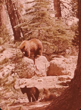[Yosemite National Park (diapositive turistiche)]