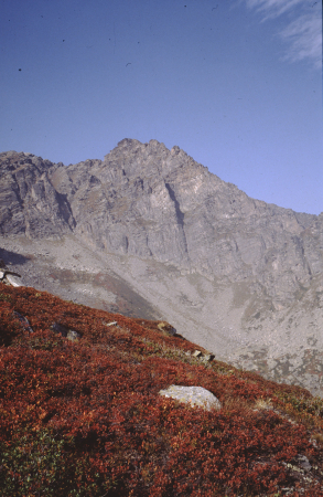 [Paesaggio di zona non identificata, area del Monte Bianco]